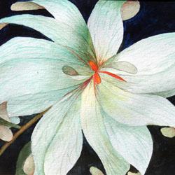 White Flower Note Card Set